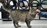cat-of-istanbul